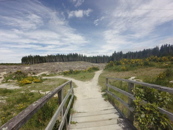 Taupo - Craters Of The Moon MTB Park