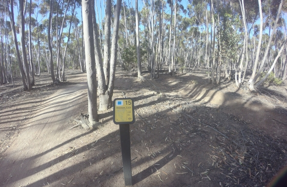 you yangs mtb park